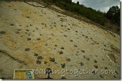 Dinosaur tracks at Dinosaur Ridge, Colorado