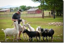 Jim the Goat Whisperer