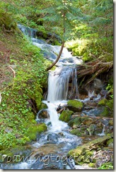 Stream in Mount Rainier National Park