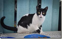 Nanny Cay Cat