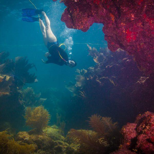 Coral Crevasse