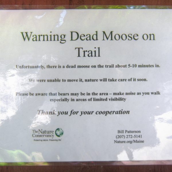 Moose on Trail