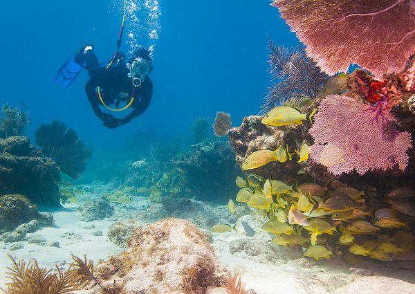 Diving Snapper Ledge