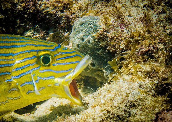 Diving Pickles Reef