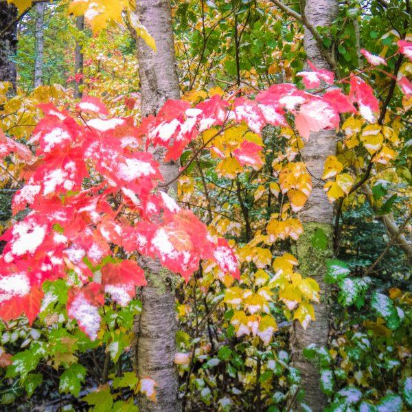 Fall-Loving Fruitcakes
