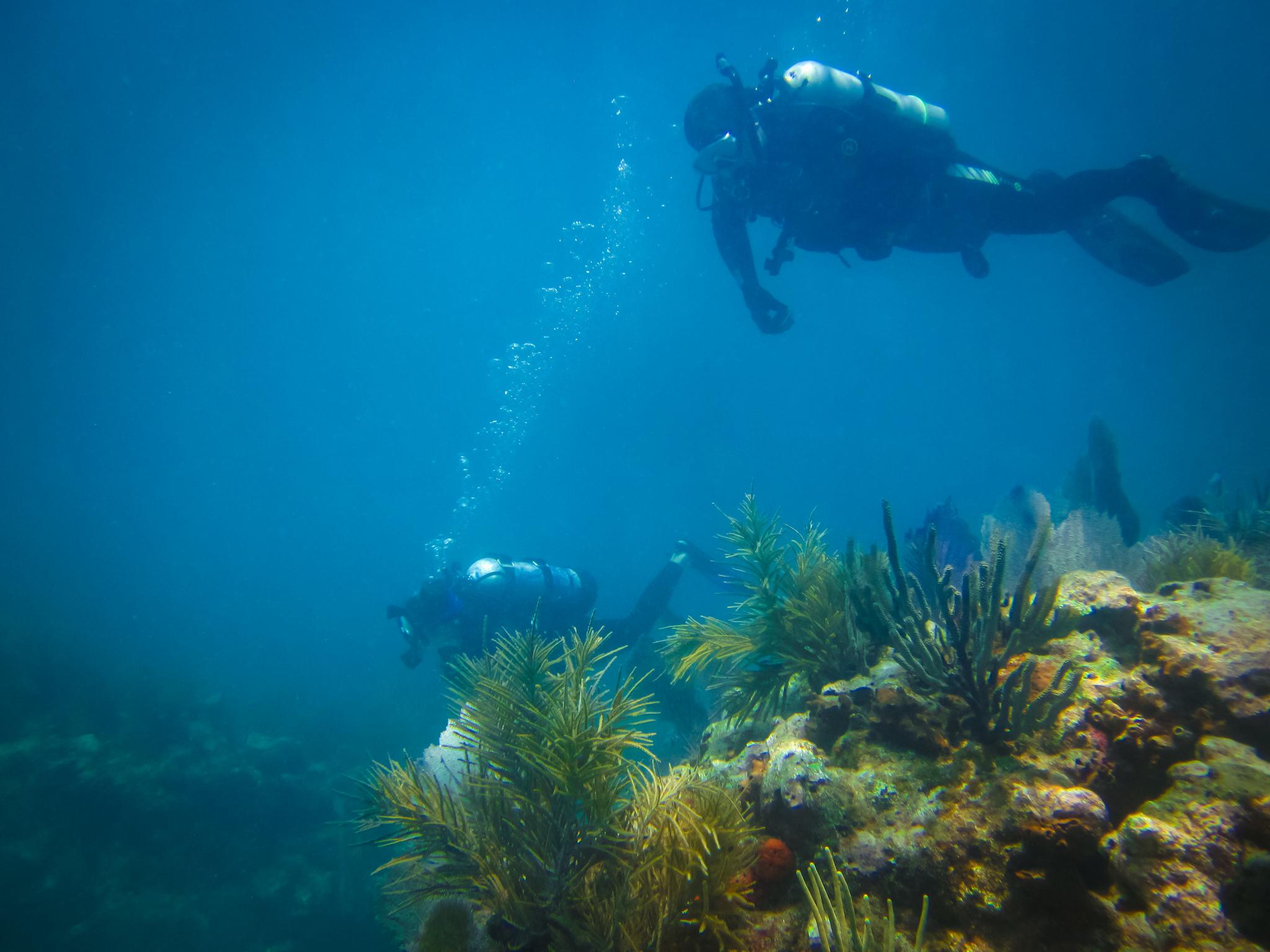 diving-buddies